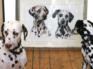 Portraitzeichnung Dalmatiner Aquarell nach Foto