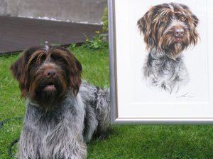 Portraitzeichnung Griffon Aquarell nach Foto