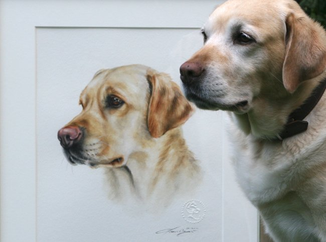 Portrait Zeichnung Labrador Aquarell nach Foto