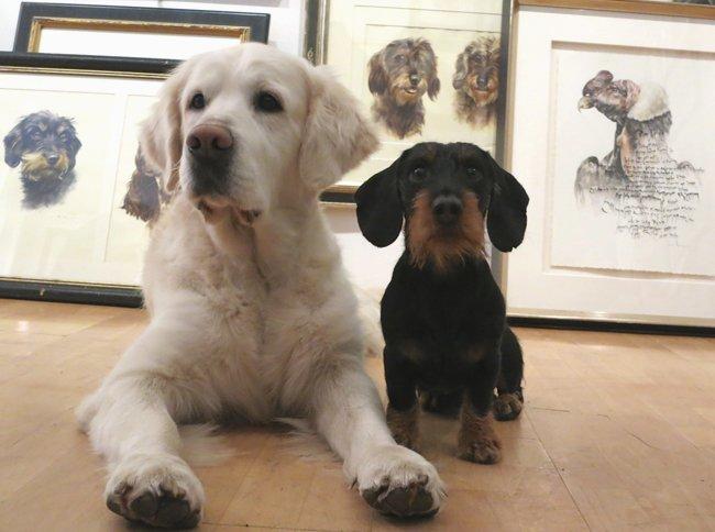 Portrait Golden Retriever und Dackel im Atelier