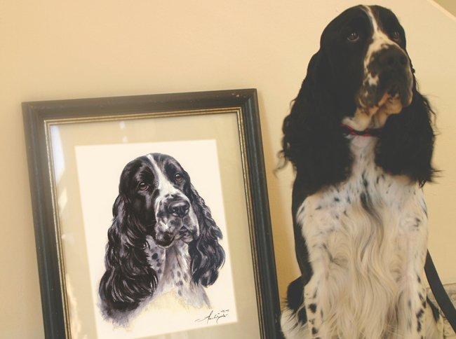 Portraitzeichnung nach Foto Englischer Springer Spaniel Aquarell