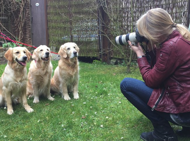 Portrait Foto Session Golden Retriever im Atelier
