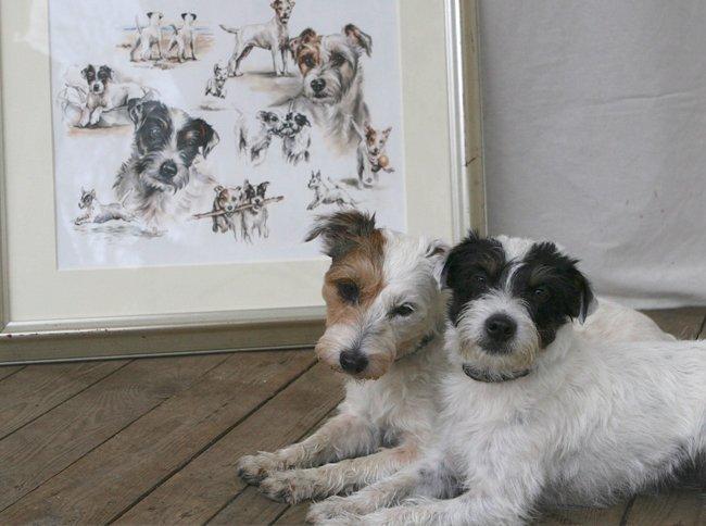 Portraitzeichnung Parson Russell Terrier Aquarell