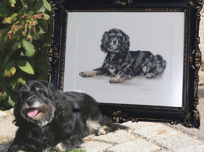 Portraitzeichnung Tibet Terrier Aquarell