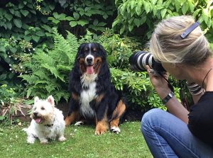Foto Session Berner Sennenhund und West Highland White Terrier