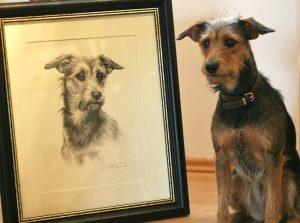 Portrait nach Foto Kohlezeichnung Mischling