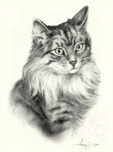 Katze_09_sw_o