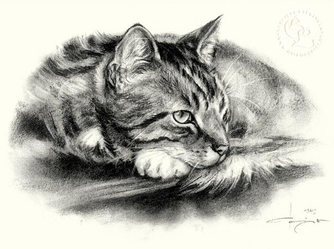 Katze_l_08_sw_o