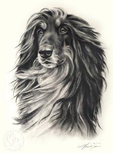 hund_afghane_sw_o