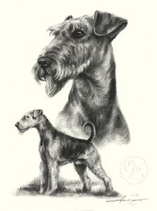 hund_airedale_terrier_sw_o