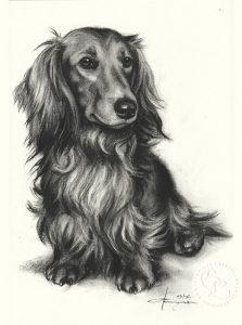 hund_dackel_langhaar_sw_o