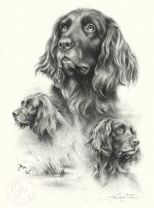 Hundeportrait Zeichnung