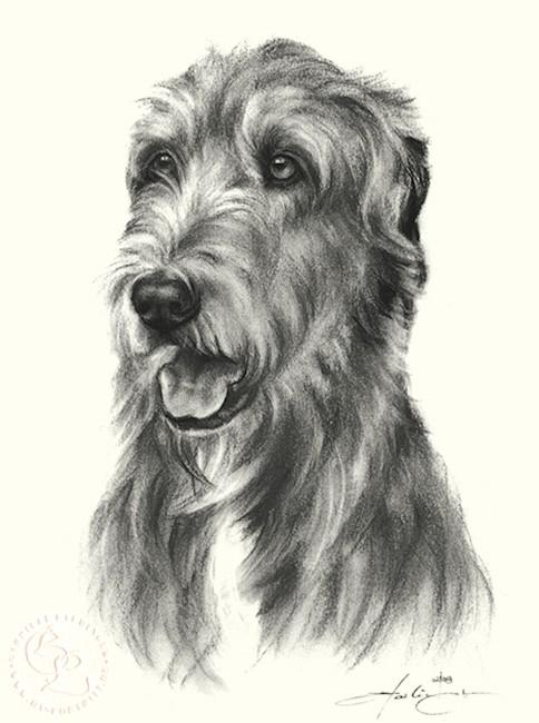 hund_irischer_wolfshund_sw_o