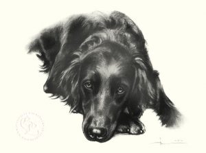 hund_l_flat_coated_retriever_tw_sw_o