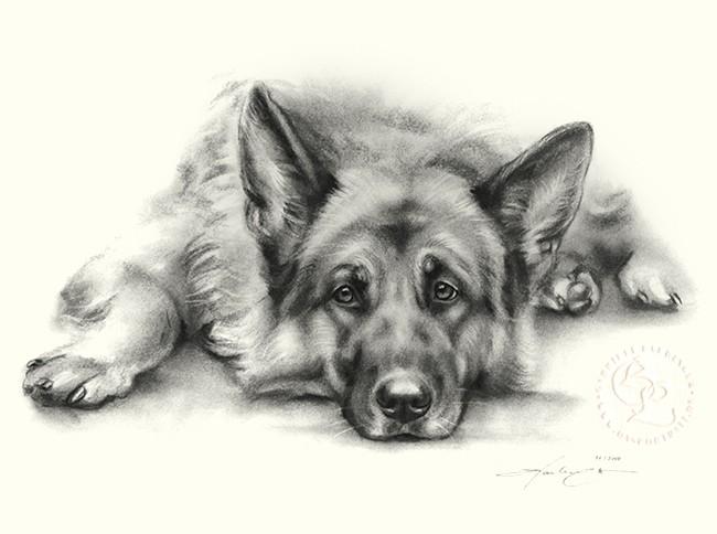 hund_l_schaeferhund_sw_u