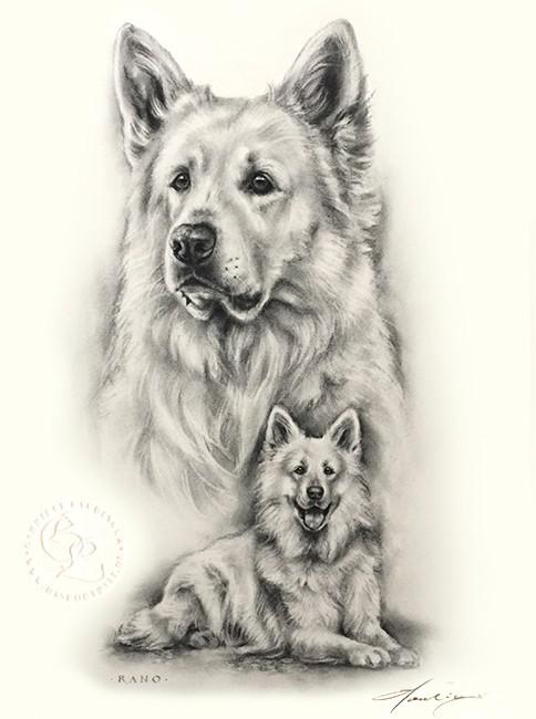 hund_schäferhund_weiss_sw_u