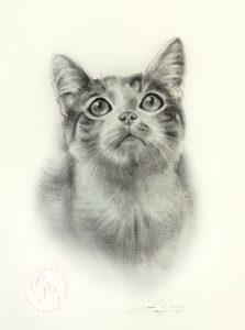 Katzenportrait Zeichnung
