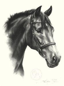 Pferdeportrait Zeichnung