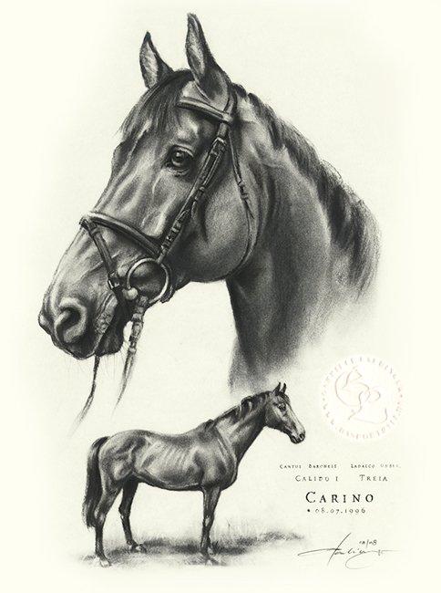 pferd_Carino_sw_o