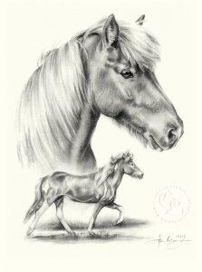 pferd_Isländer_kompo_sw_m