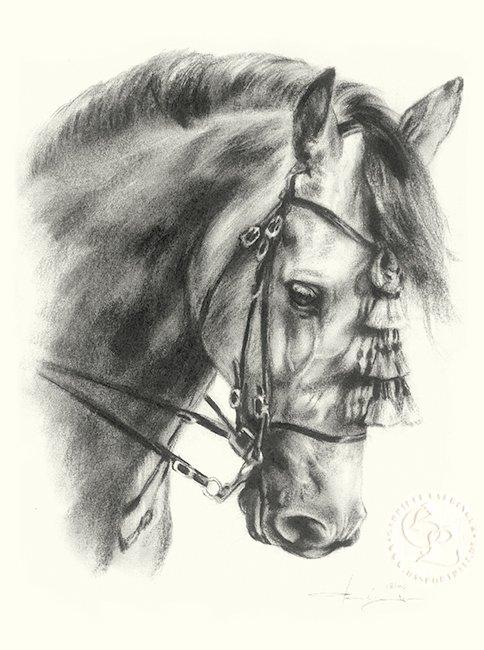 pferd_andalusier_01_sw