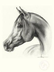 pferd_araber_sw_o