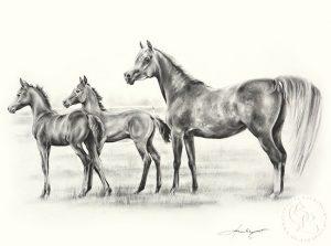 pferd_kompo_3araber_sw_o