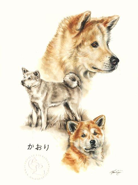 Akita Inu  Aquarell   Hundeportrait