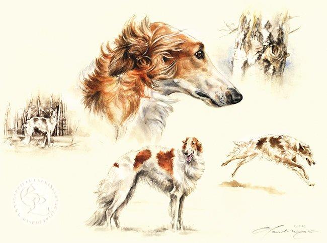 Barsoi Aquarell   Hundeportrait