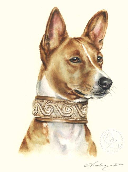 Basenji Aquarell   Hundeportrait