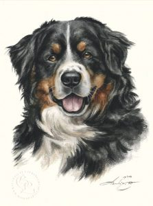 Berner Sennenhund  Aquarell   Hundeportrait