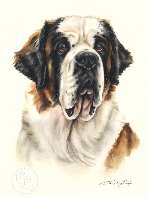 Bernhardiner Aquarell   Hundeportrait