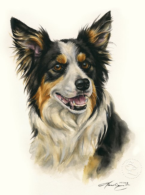 Border Collie  Aquarell   Hundeportrait