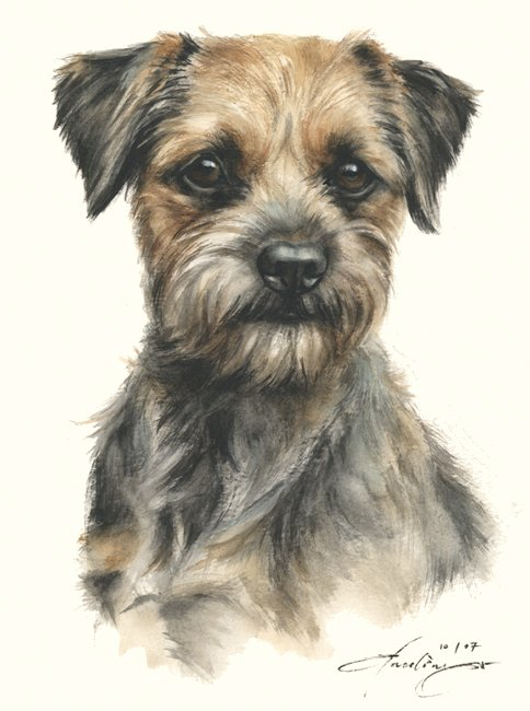 Border Terrier  Aquarell   Hundeportrait