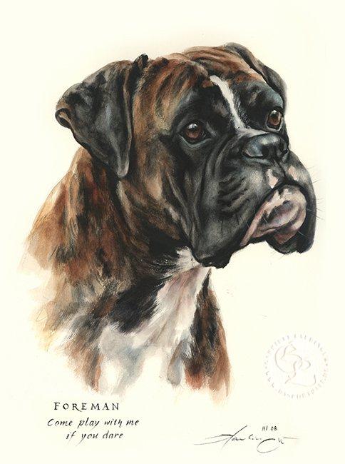 Boxer Aquarell   Hundeportrait