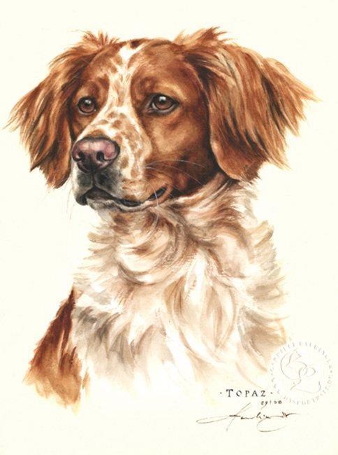 Bretone Aquarell   Hundeportrait