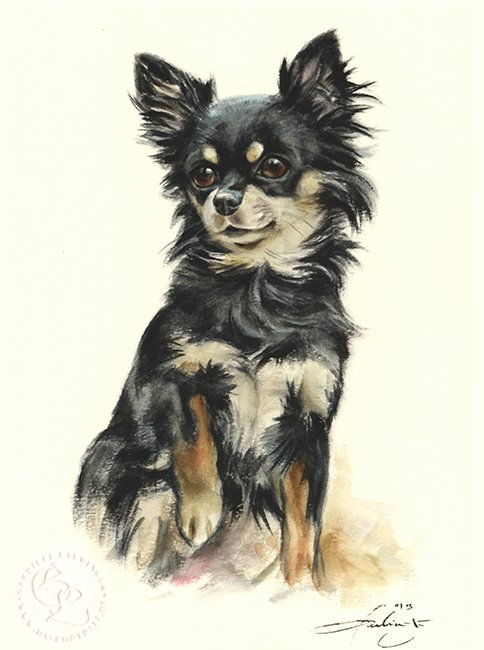 Chihuahua Aquarell   Hundeportrait