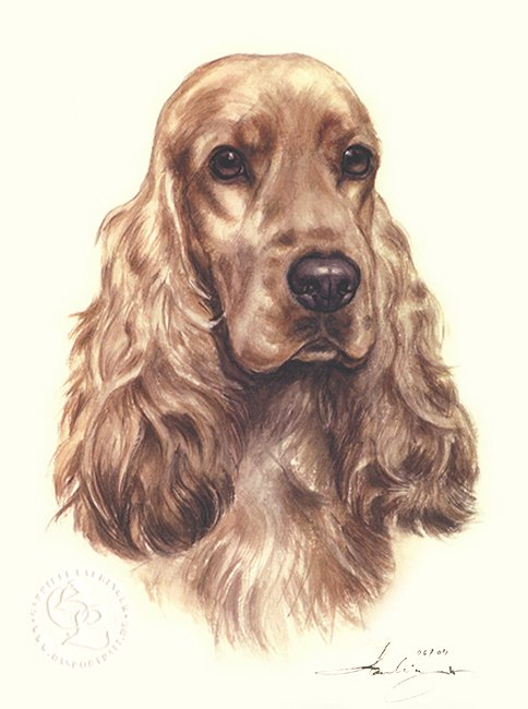 Cocker Spaniel  Aquarell   Hundeportrait
