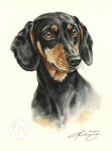 Dackel Kurzhaar  Aquarell   Hundeportrait