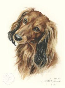 Dackel Langhaar  Aquarell   Hundeportrait