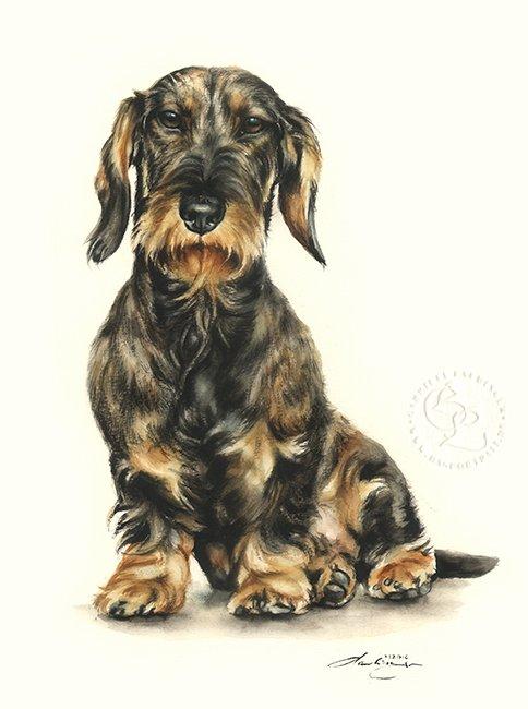 Dackel Rauhaar  Aquarell   Hundeportrait