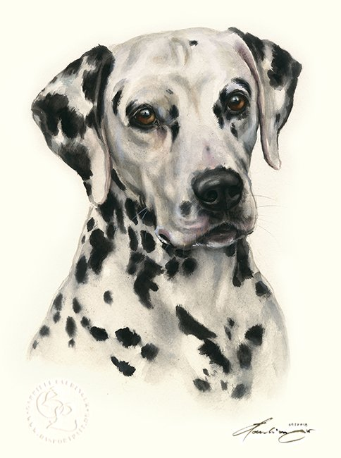 Dalmatiner Aquarell   Hundeportrait