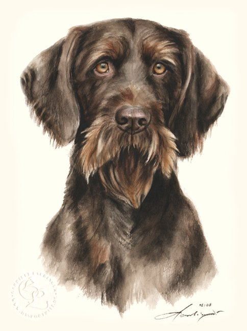 Deutsch Drahthaar  Aquarell   Hundeportrait