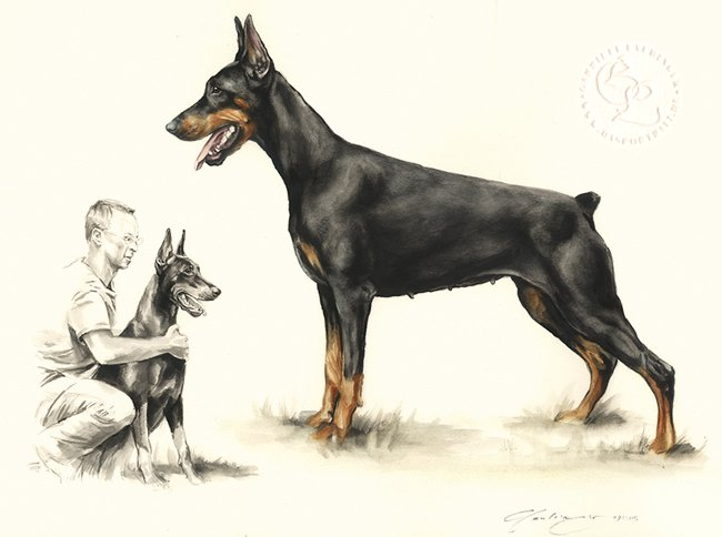 Dobermann Aquarell   Hundeportrait