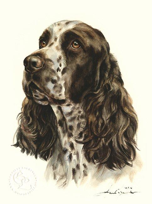 Englisch Springer Spaniel  Aquarell   Hundeportrait