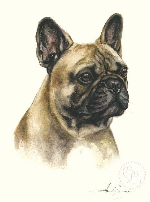 Französische Bulldogge  Aquarell   Hundeportrait