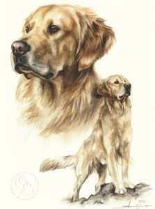 Golden Retriever  Aquarell   Hundeportrait