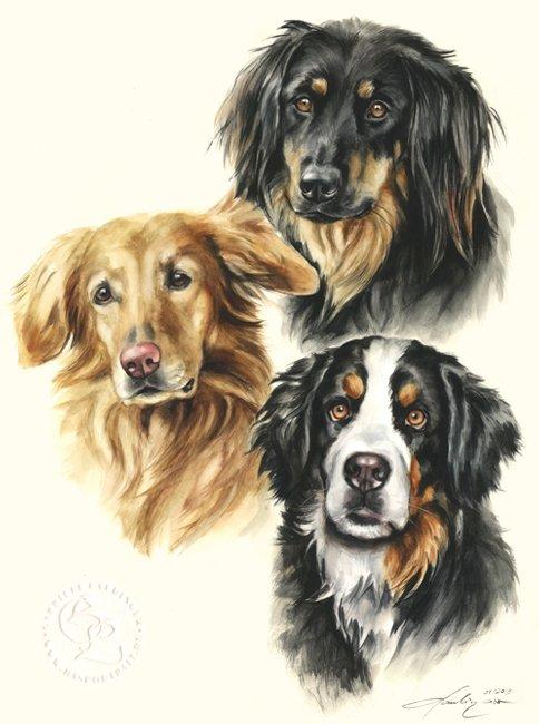 Hovawart Hovawart Berner Sennenhund  Aquarell   Hundeportrait