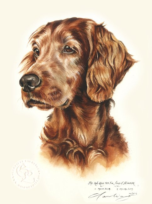 Irish Setter  Aquarell   Hundeportrait