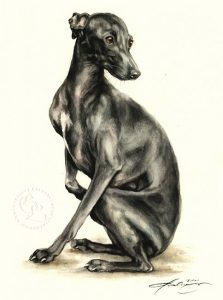 Italienisches Windspiel  Aquarell   Hundeportrait
